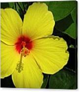 Yellow Red Hibiscus Canvas Print
