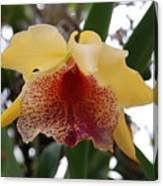 Yellow Red Orchid Canvas Print