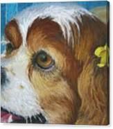 Yellow Ribbons Close-up Canvas Print