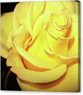 Yellow Rose For Friendship Canvas Print