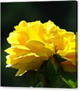 Yellow Rose Sunlit Rose Garden Landscape Art Baslee Troutman  Canvas Print
