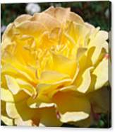 Yellow Rose Sunlit Summer Roses Flowers Art Prints Baslee Troutman Canvas Print
