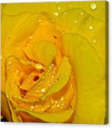 Yellow Rose With Droplets By Kaye Menner Canvas Print