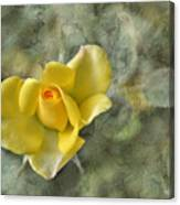 Yellow Rose With Old Marbel Texture Background Canvas Print