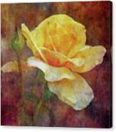 Yellow Rose With Raindrops 3590 Idp_2 Canvas Print