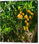 Yellow Seeds Canvas Print