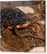 Yellow-spotted Turtle Crawling Through Wetland Canvas Print