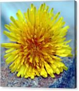 Yellow Spring Canvas Print