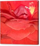 Yellow-striped Red Rose Canvas Print