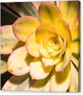 Yellow Succulent Canvas Print