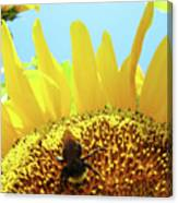 Yellow Sunflower Art Prints Bumble Bee Baslee Troutman Canvas Print