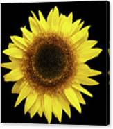 Yellow Sunflower Isolated On Black Background 8 Canvas Print