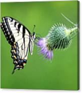 Yellow Swallow Tail 2 Canvas Print