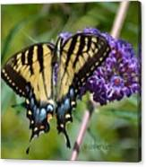 Yellow Swallowtail Butterfly Two Canvas Print