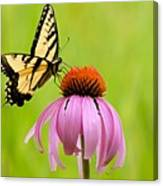 Yellow Swallowtail On Cone Flower Canvas Print
