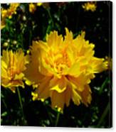 Yellow Symphony Canvas Print