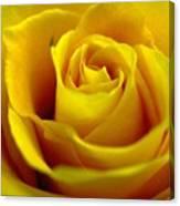 Yellow Tea Canvas Print