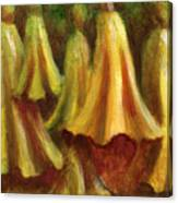 Yellow Trumpet Flowers Canvas Print