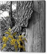 Yellow Tufts Canvas Print