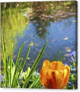 Yellow Tulip In Giverny  Canvas Print