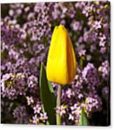 Yellow Tulip In The Garden Canvas Print