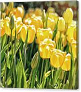 Yellow Tulip Panoramic Canvas Print