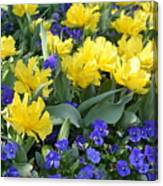 Yellow Tulips And Violets Canvas Print