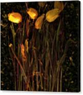 Yellow Tulips Decaying At Sunset Canvas Print