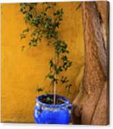 Yellow Wall, Blue Pot Canvas Print