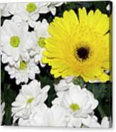 Yellow White Flowers Canvas Print