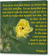 Yellow Wildflower - Romans Canvas Print