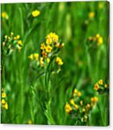 Yellow Wildflower Photograph Canvas Print