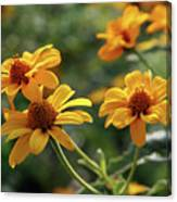 Yellow Wildflowers 3680 H_2 Canvas Print