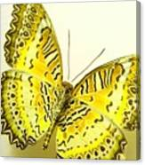 Yellow Wings In Gold Canvas Print