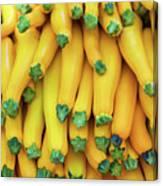 Yellow Zucchini Canvas Print