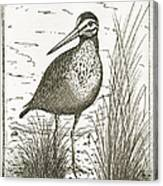 Yellowlegs Shorebird Canvas Print