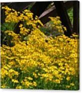 Yellows Canvas Print