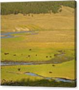 Yellowstone Bison 2 Canvas Print