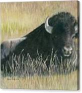 Yellowstone Loner Canvas Print