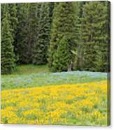 Yellowstone Meadow Canvas Print
