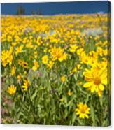 Yellowstone Wildflower Canvas Print