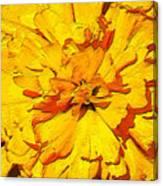 Yelow Tulip Canvas Print