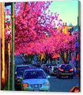 Yew Street Spring Canvas Print