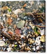 York Beach Shore Canvas Print
