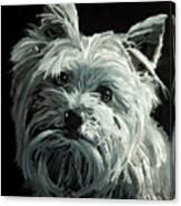 Yorkie Canvas Print