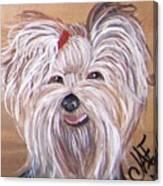 Yorkie Smiles Canvas Print