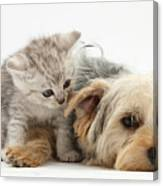 Yorkshire Terrier And Tabby Kitten Canvas Print