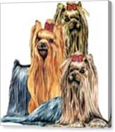 Yorkshire Terriers Canvas Print