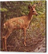 Yosemite #2, Detail Canvas Print