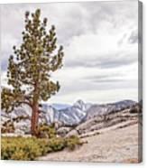 Yosemite Tree Canvas Print